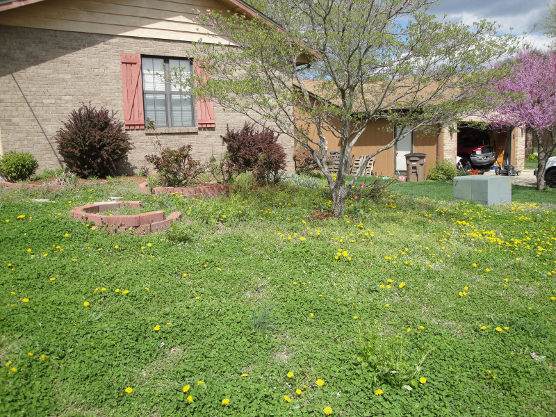 A lawn filled with weeds