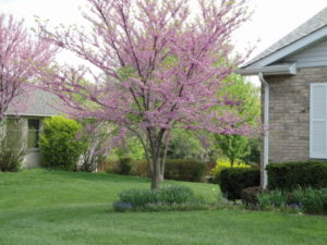 Ornamental tree and shrub care