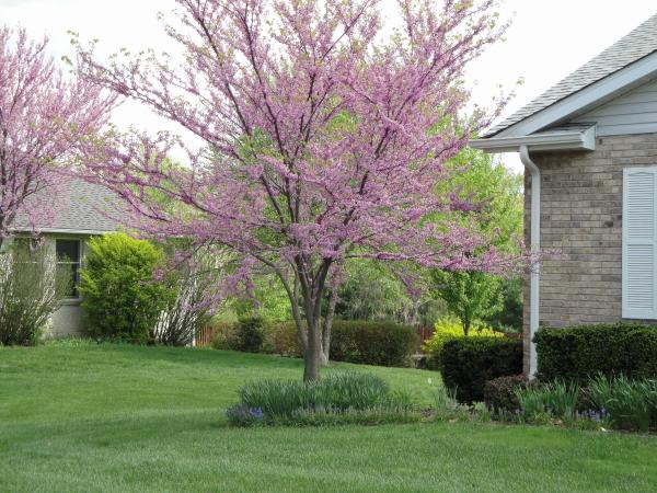 Ornamental tree and shrub care