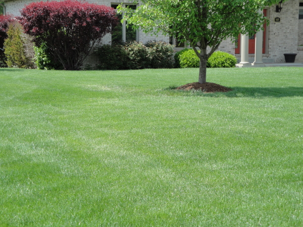 lawn without subsurface feeding insects