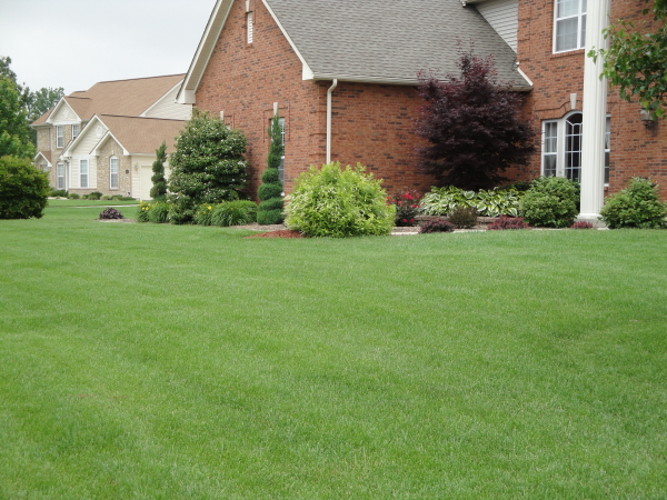 A beautiful healthy and weed free lawn as the result of a quality lawn care services