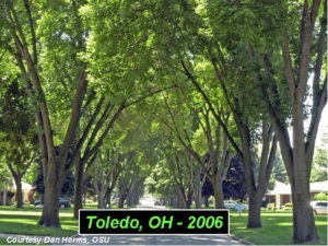Toledo, Ohio in 2006 prior to the Emerald Ash Borer infestation