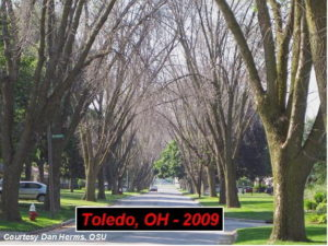 Toledo, Ohio in 2009 following the Emerald Ash Borer infestation