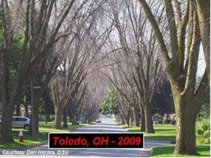 Toledo, Ohio in 2009 following the Emerald Ash Borer infestation