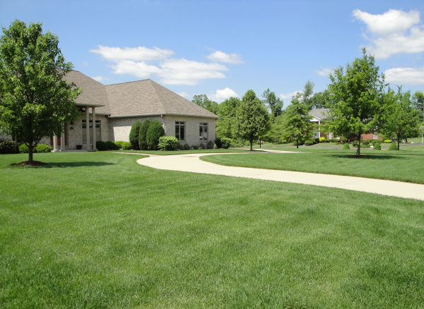 An example of a weed free lawn from a successful lawn care program