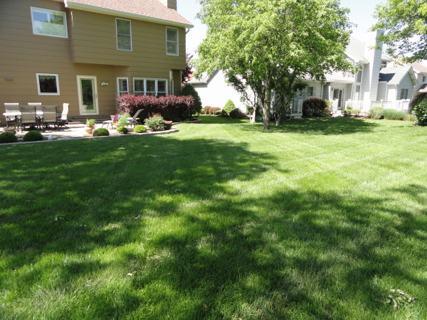 Weed free lawn with an organic lawn care program