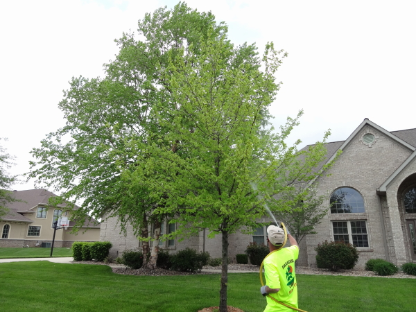 Insecticide treatment for ornamental trees and shrubs