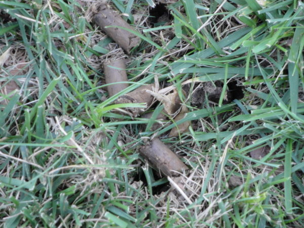 lawn aeration cores