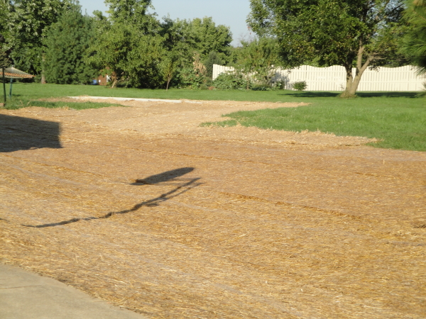 lawn renovation with straw blankets