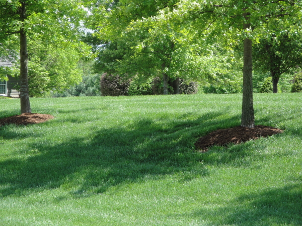 Mulch added around trees for protection and beauty