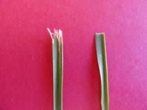 Effects of Sharp vs Dull Mower Blades