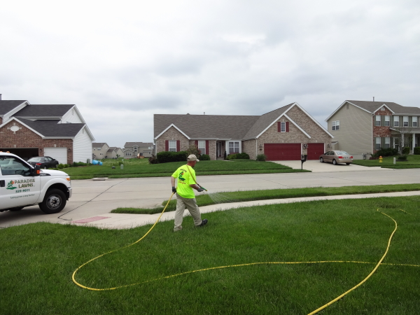 Treating a lawn for surface damaging insects