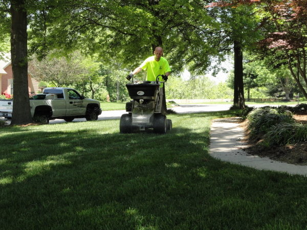 Applying fertilizer in the summer