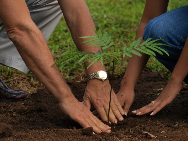 Caring for a newly planted tree