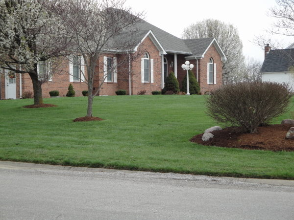 choosing a lawn care company