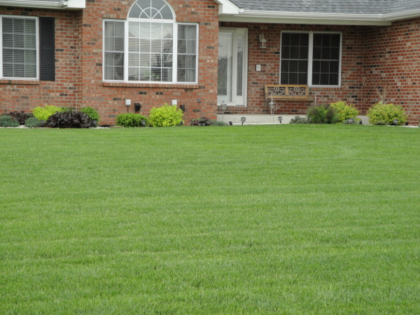 Traditional lawn care or organic lawn care