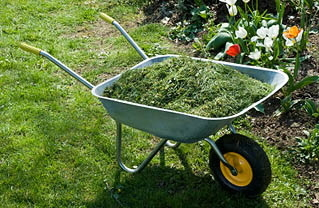 Wheelbarrow containing grass clippings