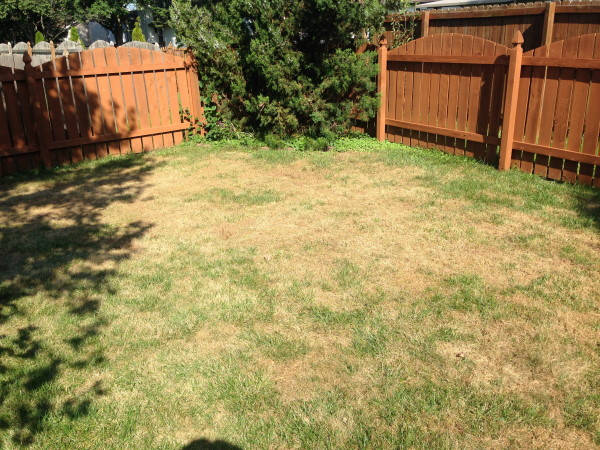 Armyworms and their quick destruction to a lawn | TurfGator