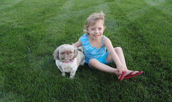 Pet friendly lawn care
