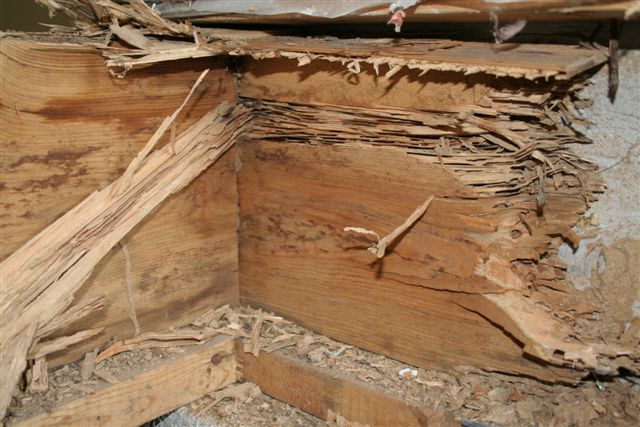 image of termite damage