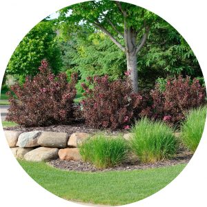 Tree with Landscaping Shrubs